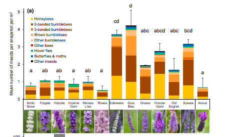 Graph of Lavender visited by bees