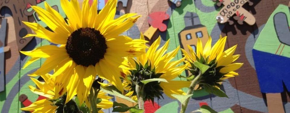 Safe Gardens for Pollinators