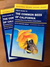 Field Guide to Common Bees cover